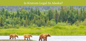 Is Kratom Legal In Alaska?