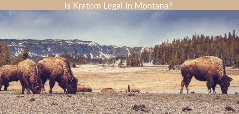Is Kratom Legal In Montana?