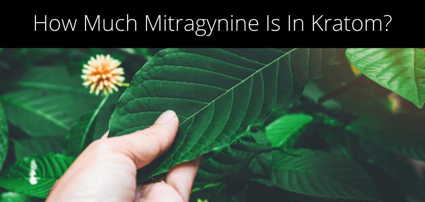 How Much Mitragynine Is In Kratom?